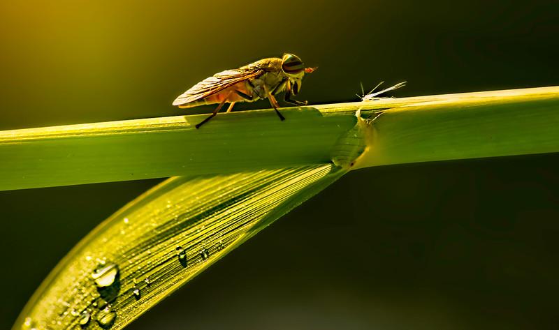 Bugs and Beetles - 193.jpg