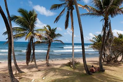 Landscape Tropics