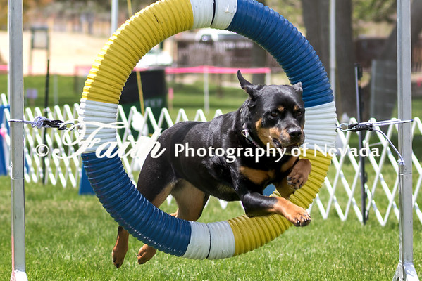 RUN 8 JWW NOV - Agility May 14 2017