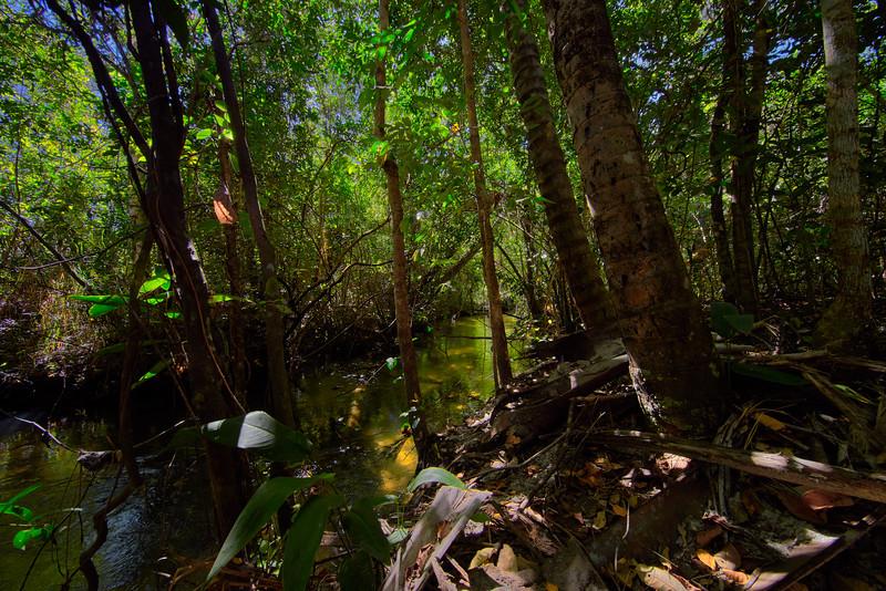 Jalapao river.jpg