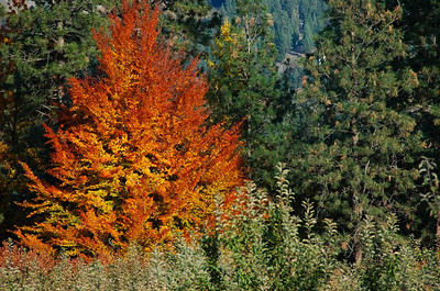 Okanagan Fall Pictures