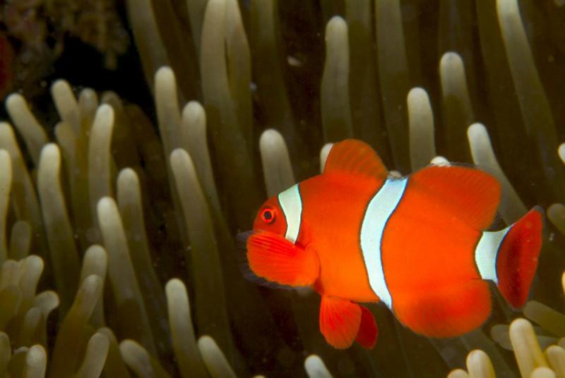 anemone secret1.jpg
