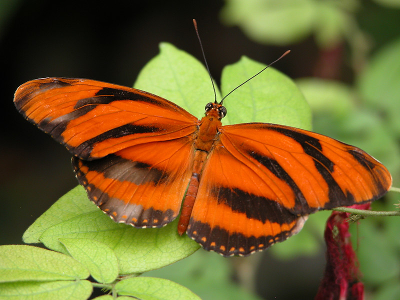 Orange An Black Butterfly.jpg