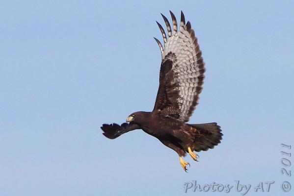 2011-11-25  Riverlands Migratory Bird Sanctuary