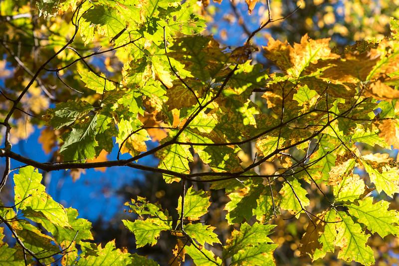 foliage-2014-62.jpg