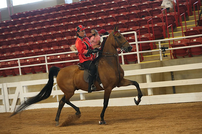 26. Roadster Horse Under Saddle