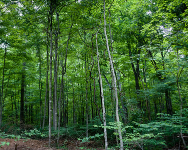 Obannon Woods