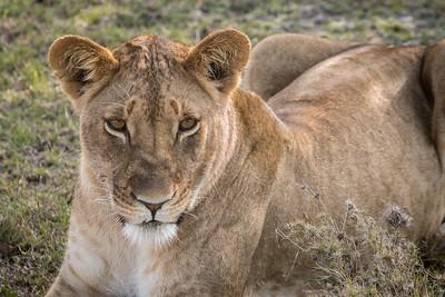 Ol Pejeta, Laikipia, Kenya