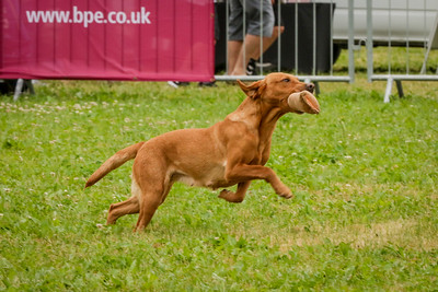 Cotswolds Show 2017 - Gundogs At The Cotswold Show