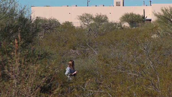 Tucson PEEK