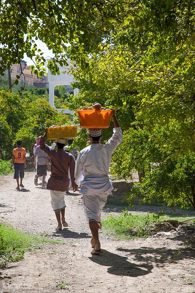 Pomegranate - Aljabal Alakhdhar (9)-Aljabal Alakhdhar-Oman.jpg