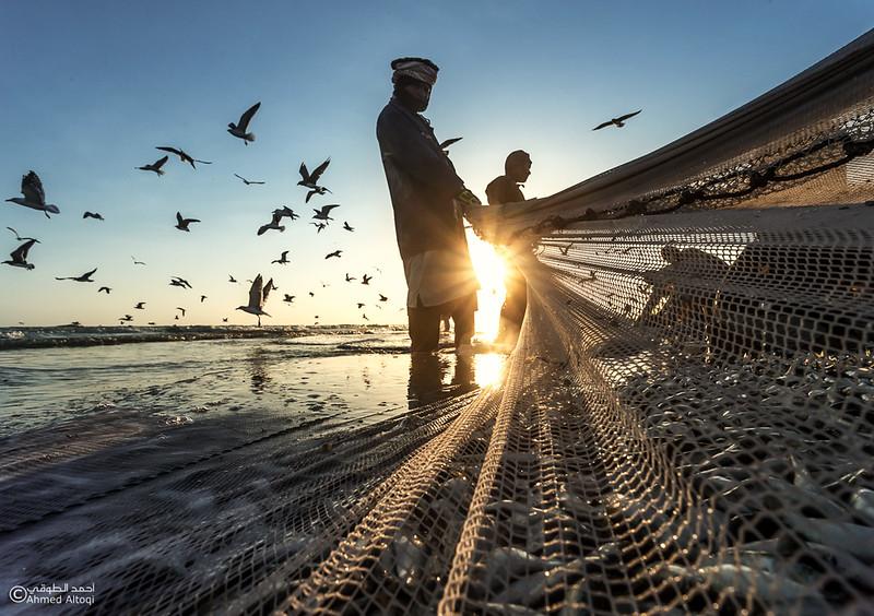 Sardine Season (43)- Dhofar.jpg