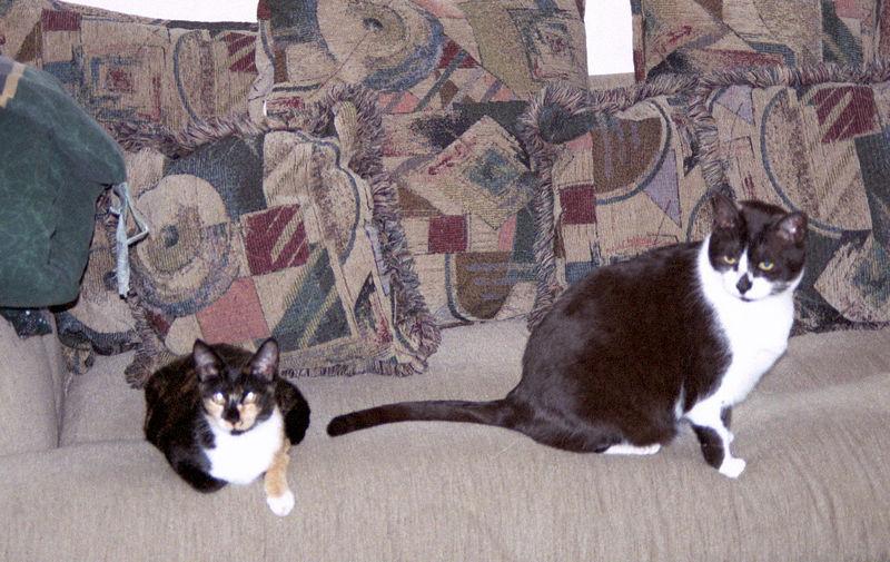 2003 12 - Cats 32.jpg