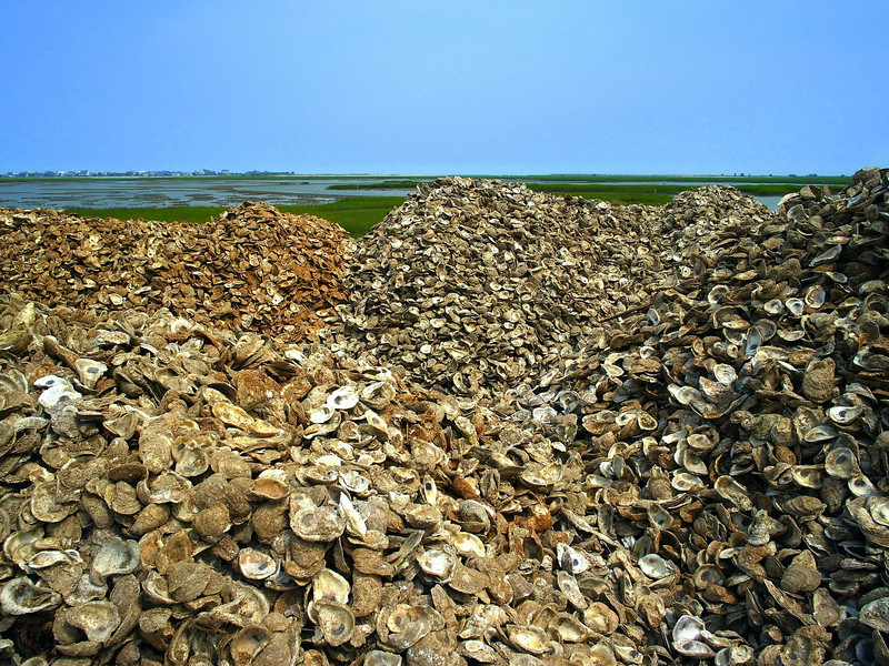 Mountains of oyster shells- Murrells Inlet SC