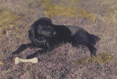 Rutter Pets: Black Dog, Carbon, Brownie, Cubby
