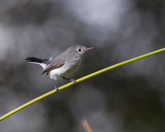 US Birds Stock Photos