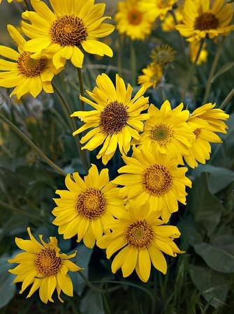 Knox Mountain Flowers 2010