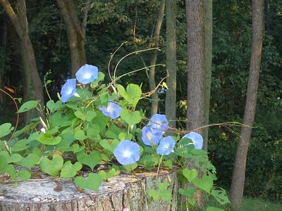 Gardens / September 2011