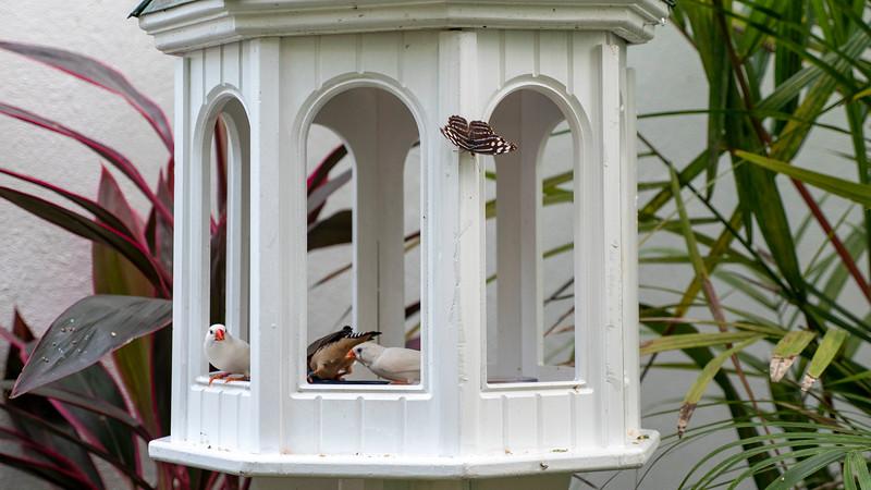 Florida-Keys-Key-West-Butterfly-Conservatory-03.jpg