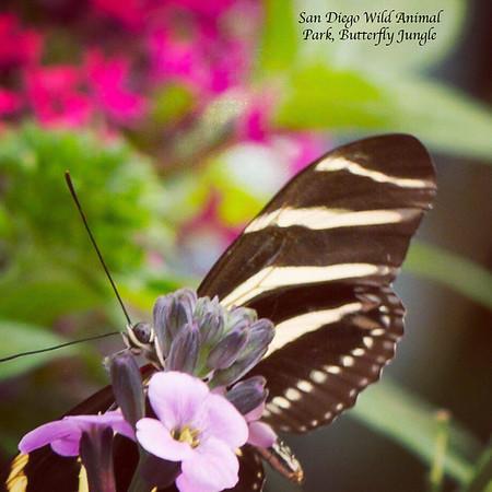 San Diego Wild  Animla Park