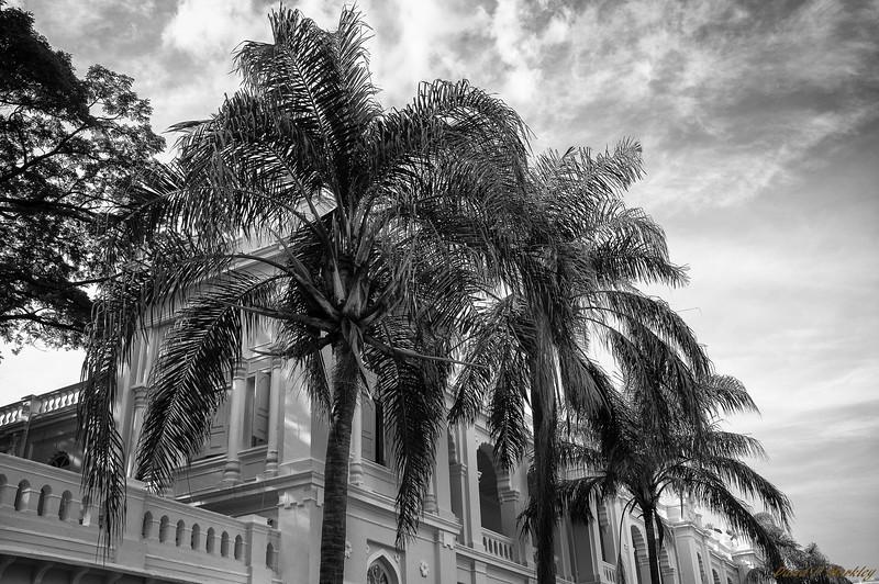 Palace Palms
