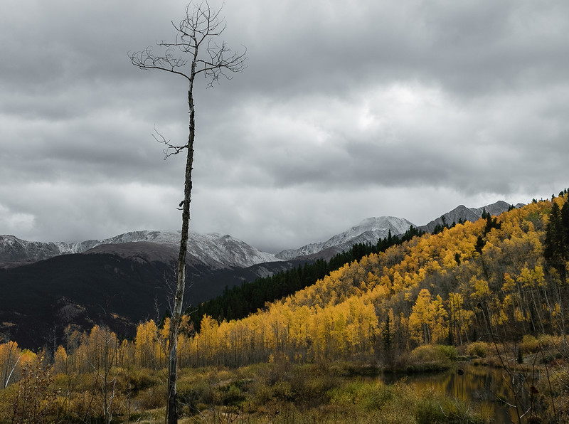 Lonely Tree and Aspen.jpg