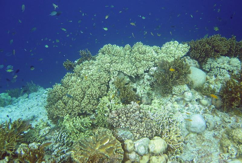 Pulau Menjangan Island