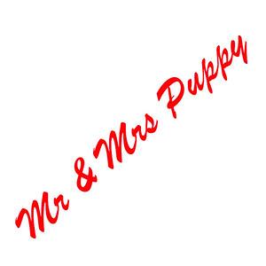 Mr & Mrs Puppy