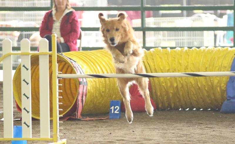11-8-15 NorCal Goldens-4936.jpg