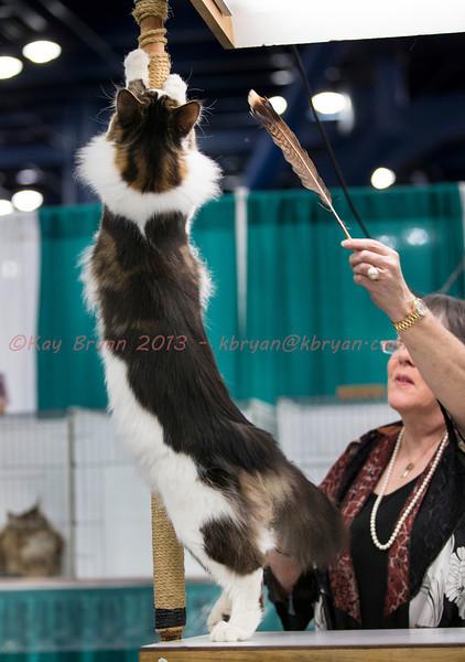 CatShow2014020_1.jpg