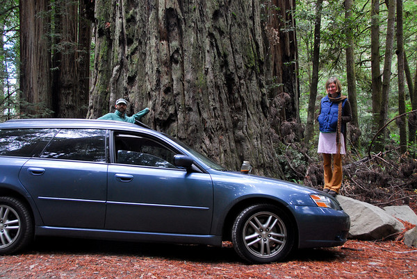 Coastal Redwoods and Caves