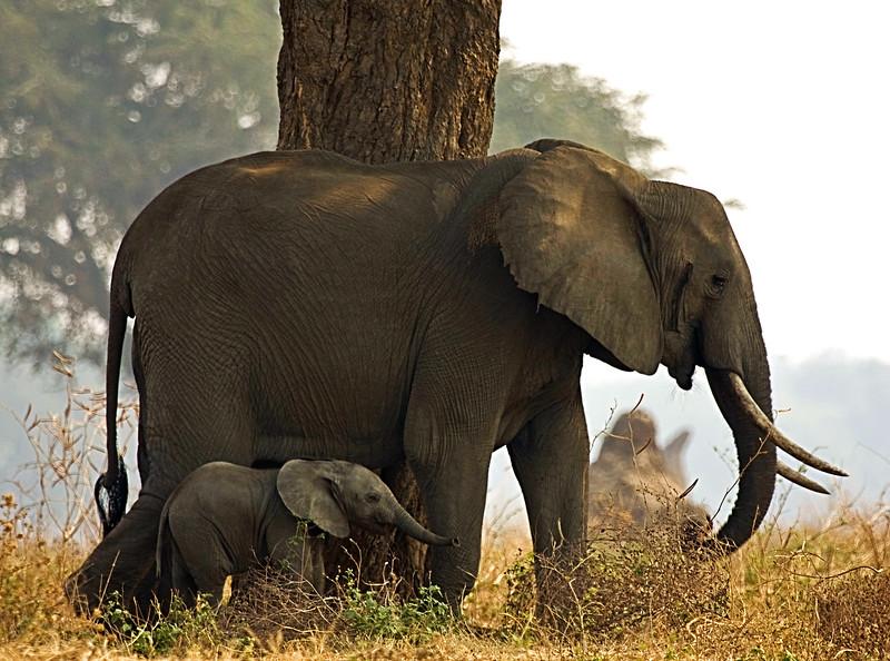 A-Elephant Mom & Baby Together-Ch to JPEG.jpg