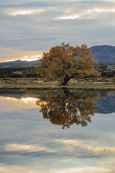 20111124 Bosque del Apache 393.jpg