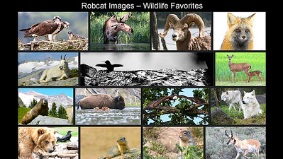 Robcat's Wildlife Favorites