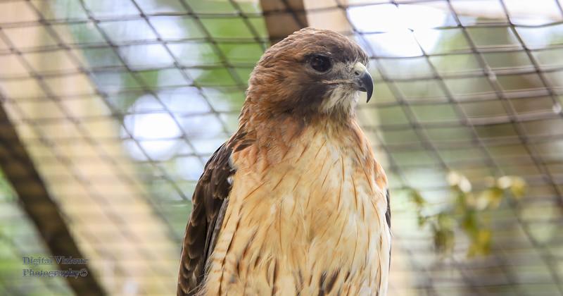 2016-07-17 Fort Wayne Zoo 1005LR.jpg