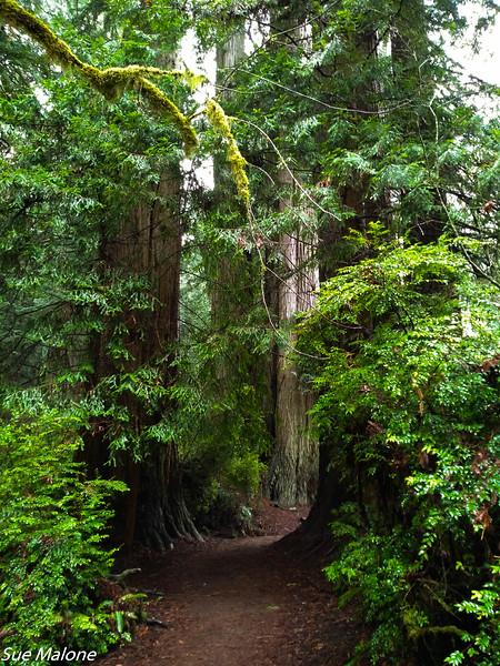 02-13-2021 Redwoods and Coast from Deborah-24.jpg