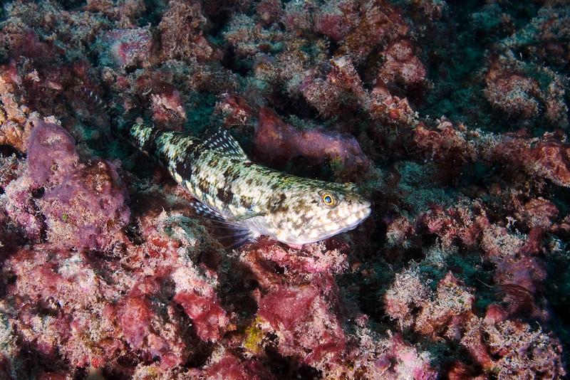 Lizard Fish .jpg