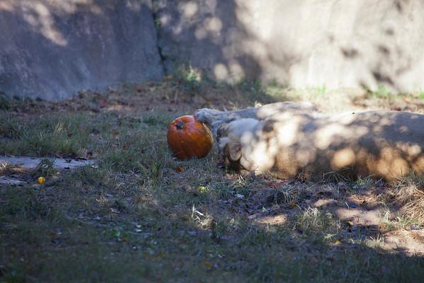 2013-Fall-Memphis-Zoo