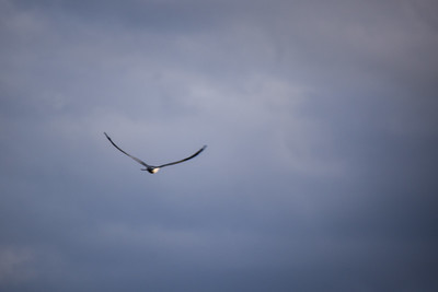 Sunset Bird Rookery Bird Rookery Kayak Tour - Keys, Ragone & Sauer