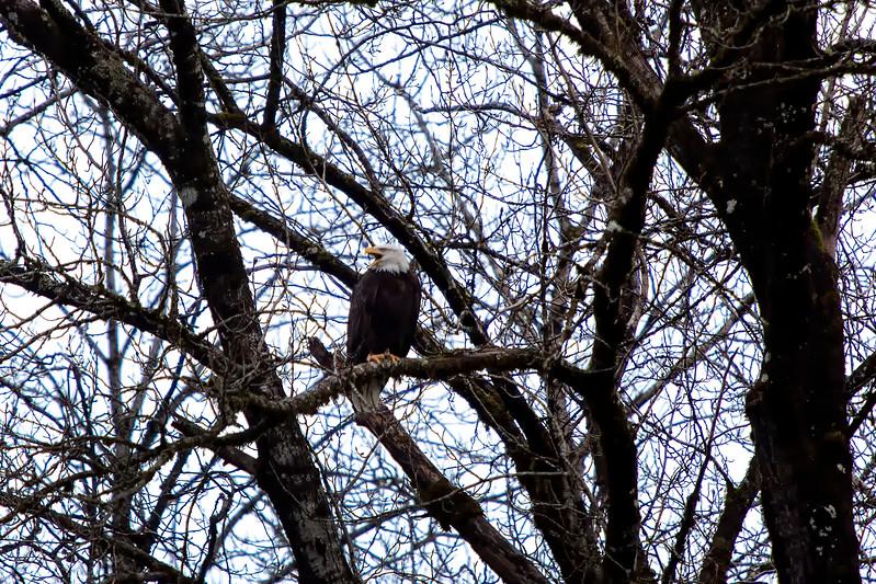 Eagles Washington-03.jpg