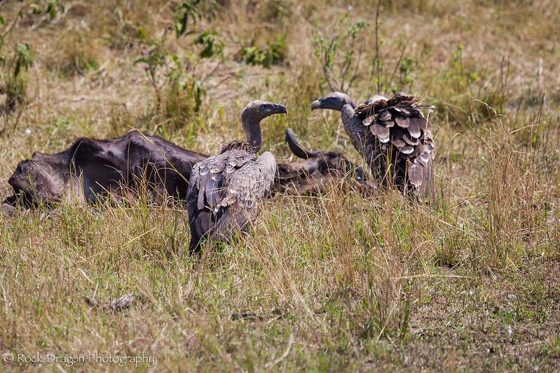 North_Serengeti-15.jpg