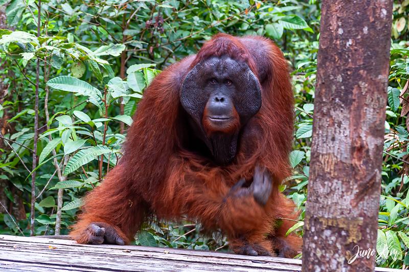 2012.10.07_Borneo_DSC_7202-Edit-Juno Kim.jpg