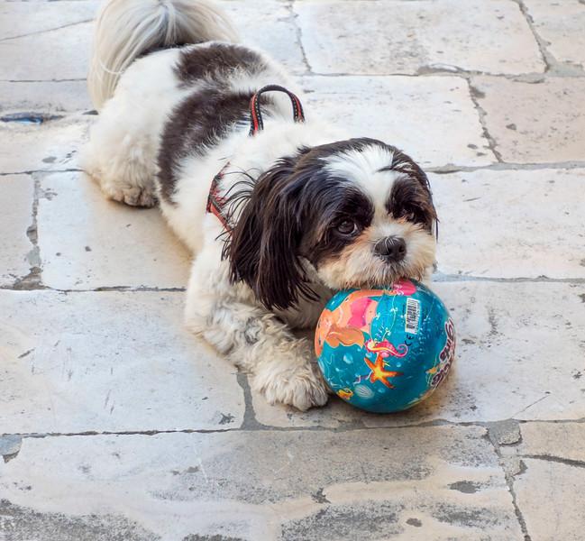 Trogir_Dog-1.jpg