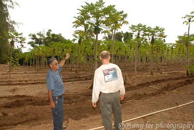 Kamiya Gold Papaya Farm