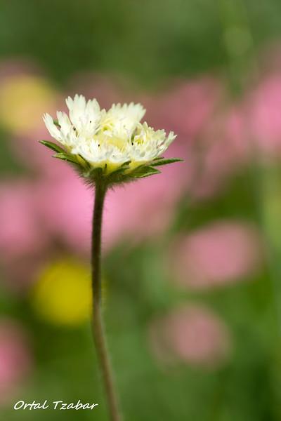 פרח לבן.jpg