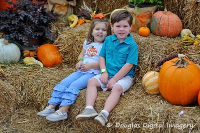 Corn Dawgs Pumpkin Field