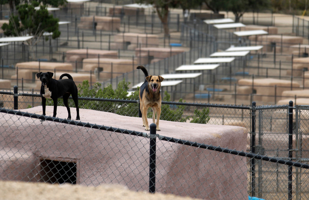 . Two dogs stand atop shelters, built of bales of straw, plywood and stucco, at Leo Grillo\'s DELTA (Dedication & Everlasting Love to Animals) Rescue complex in Acton, Calif.  Aug. 29, 2013. (AP Photo/Reed Saxon)