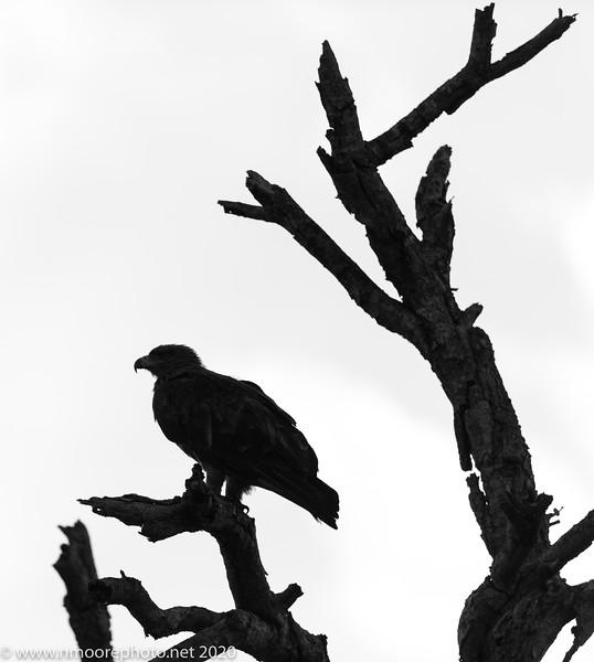 Djuma Game Reserve, Sabi Sands