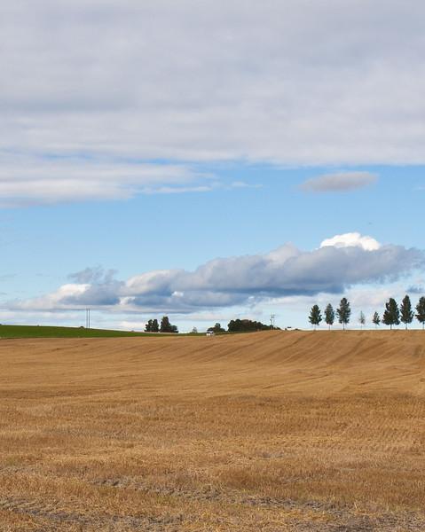 Høst2010-166