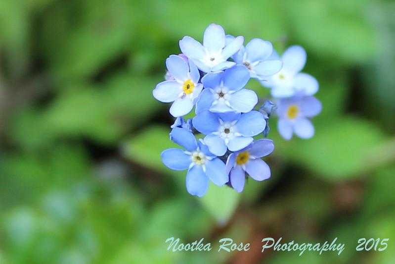 Alice Horton Baby Blue Eyes WM.jpg